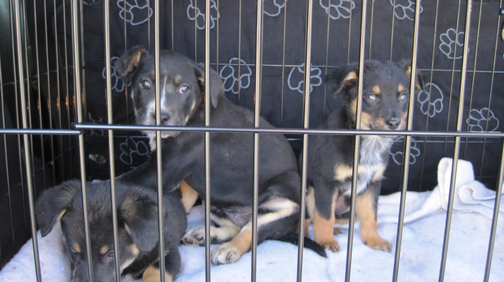 Crate GSD