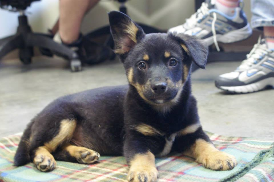 Cute Mutt Puppies 38854 | NANOZINE