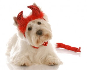 LittleDevil